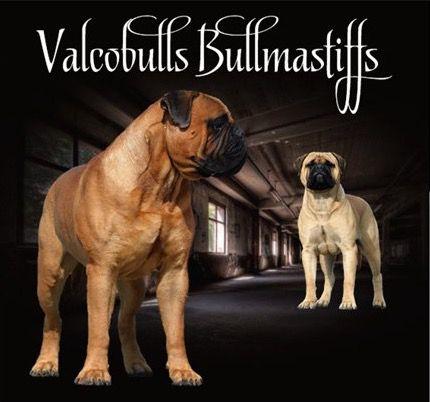 avatar valcobulls
